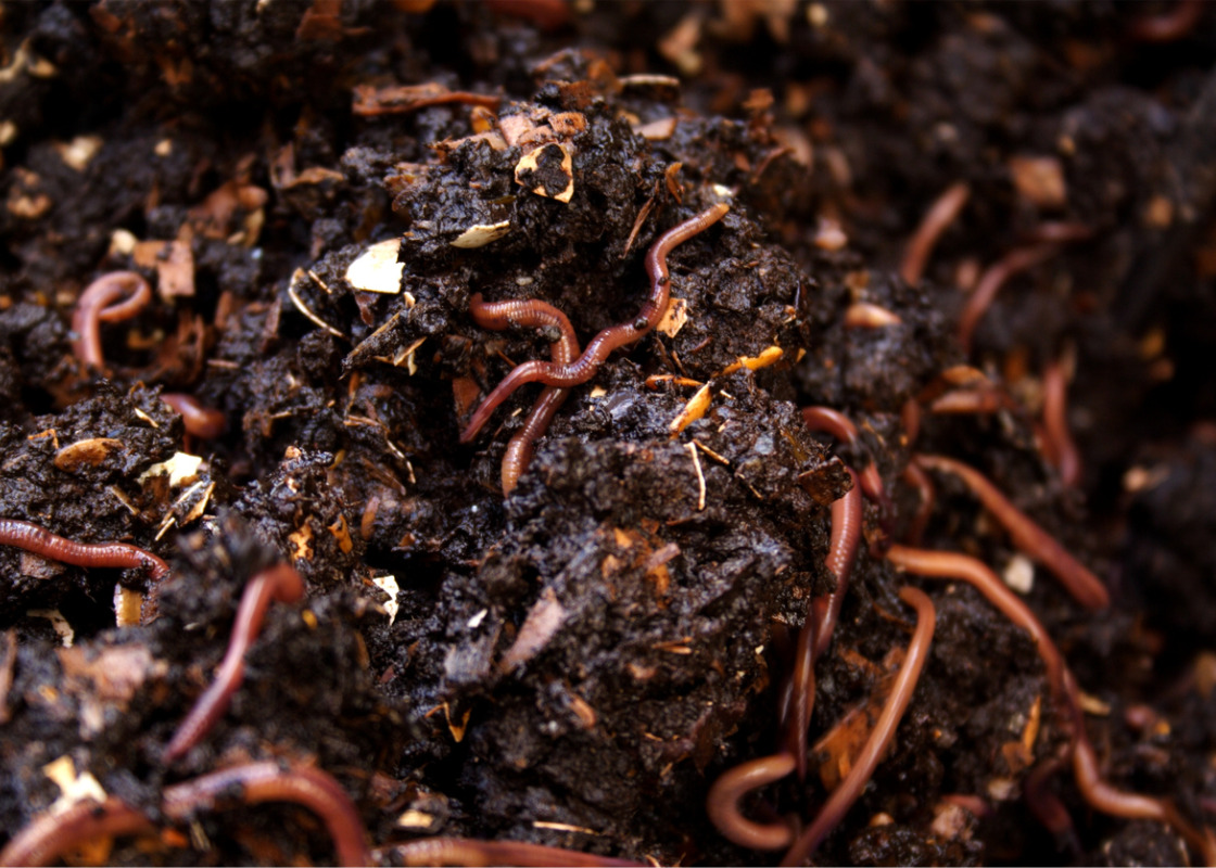 Compost and digestate