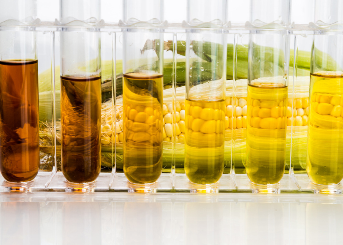 Buchumschlag von The European Biofuels Policy and Sustainability