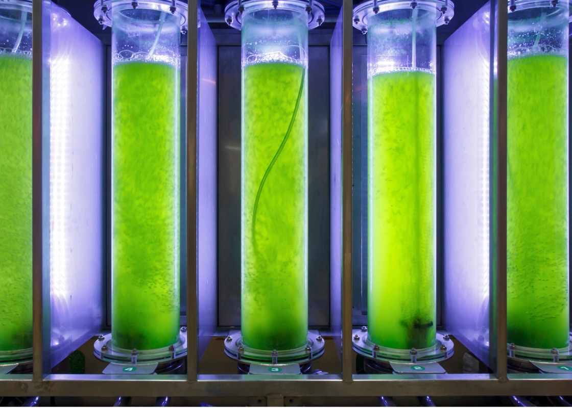 Buchumschlag von Algae – The Future for Bioenergy?